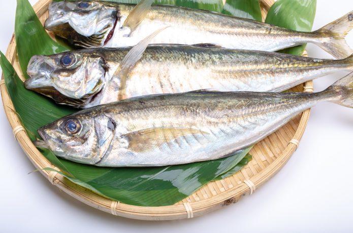 PIXTA 青魚
