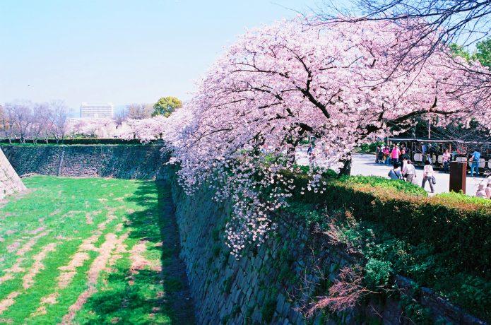 大阪城 桜 観光客