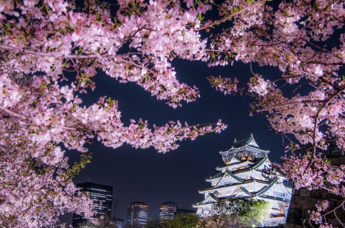 春の大阪城 桜