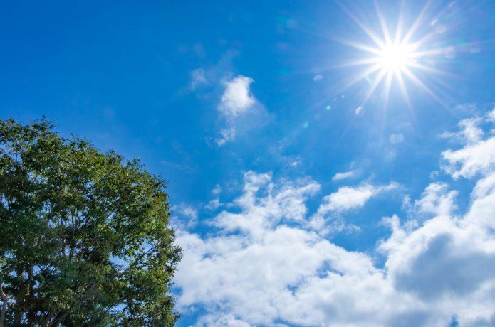 夏 太陽 雲 木