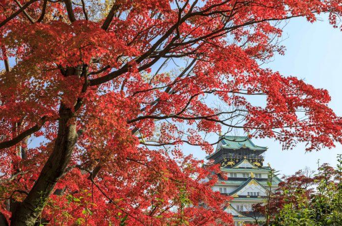 秋の大阪城 紅葉