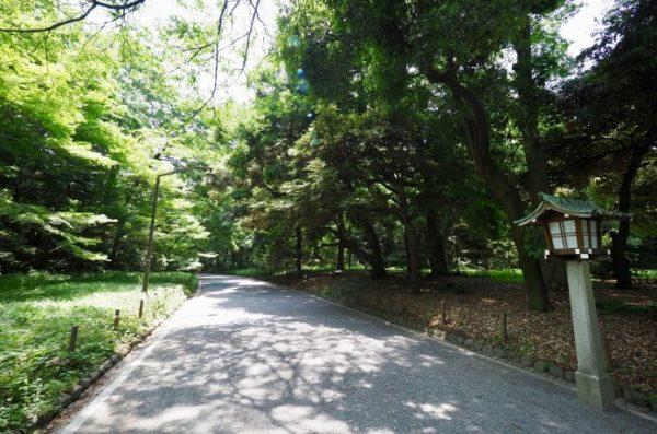 代々木公園 ランニングコース 木陰
