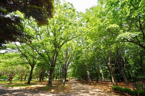 代々木公園 夏 クロカンコース