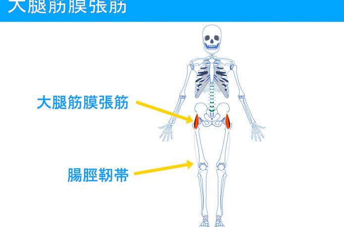腸脛靱帯のイメージ図