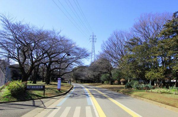 駒沢公園 ランニングコース