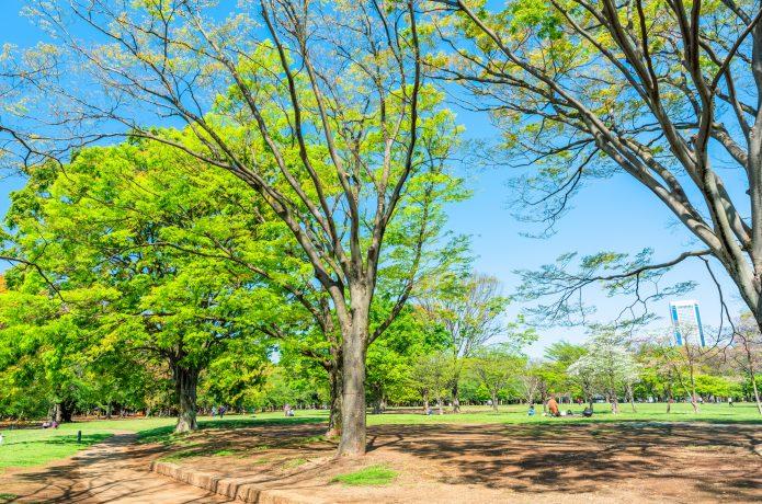 代々木公園の画像