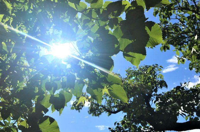 紫外線 初夏