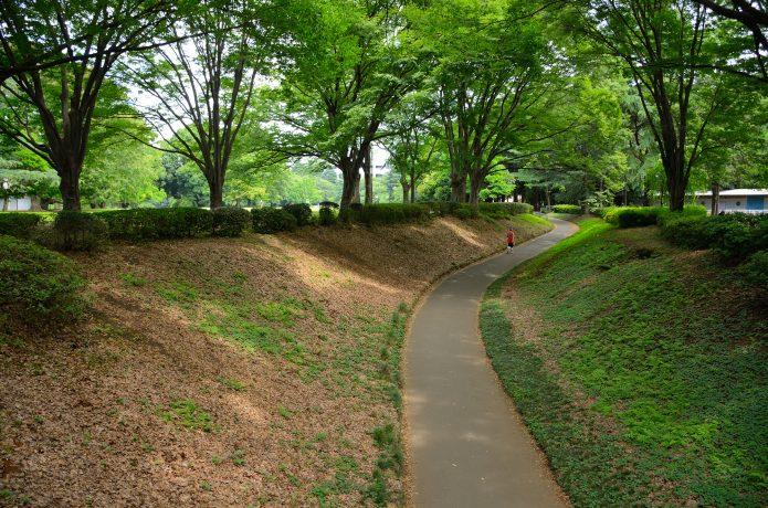 クロスカントリー走 自然公園